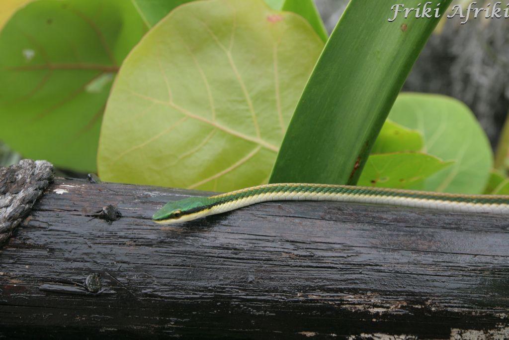 Mały, niepozorny wąż dobrze się kryje wśród zieleni