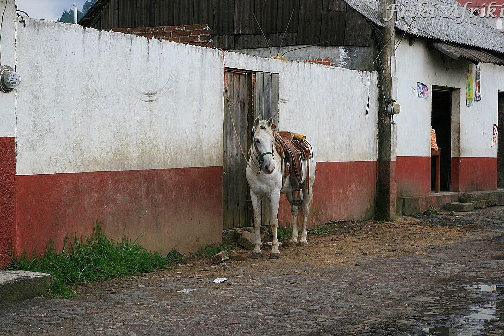 Koń - dla wielu mieszkańców główny środek transportu, a niekiedy i zarobku