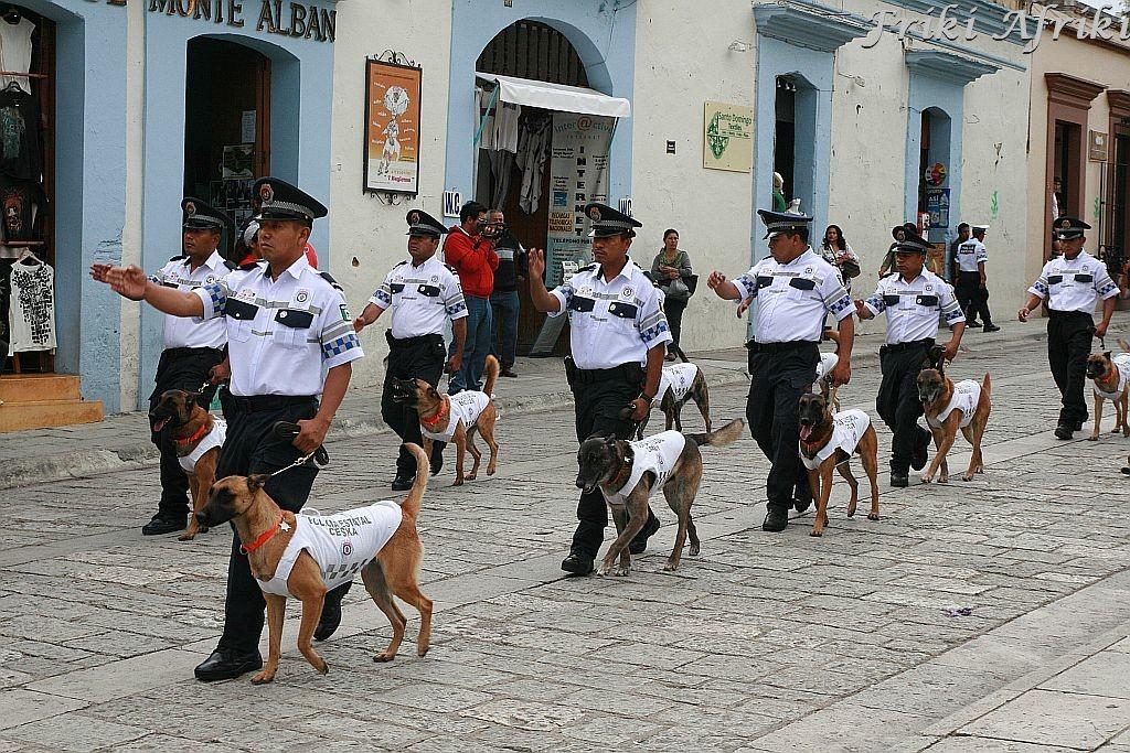Parada policjantów z psami - nie wiemy po co i dlaczego