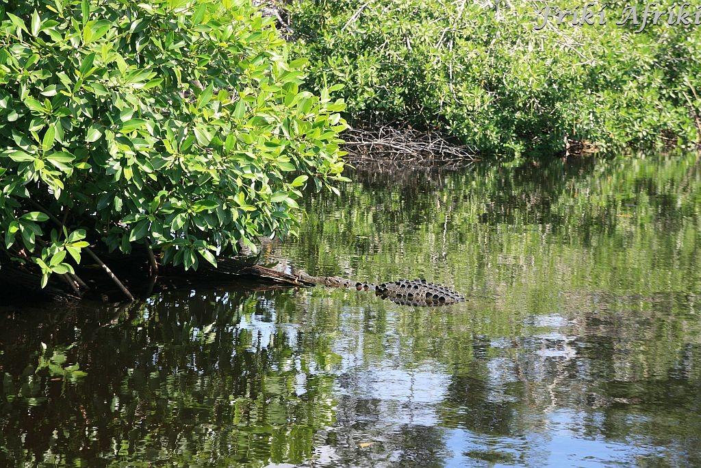 A tu kawałek plecków krokodyla - nieźle się maskują