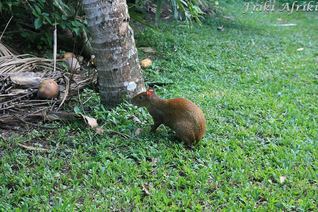 Taki stwór w Tikal, Gwatemala