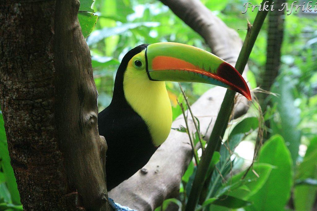 Tukan, Honduras