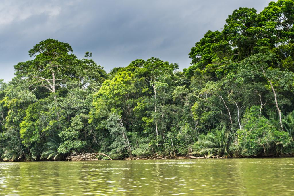 Las deszczowy porastający brzegi rzeki
