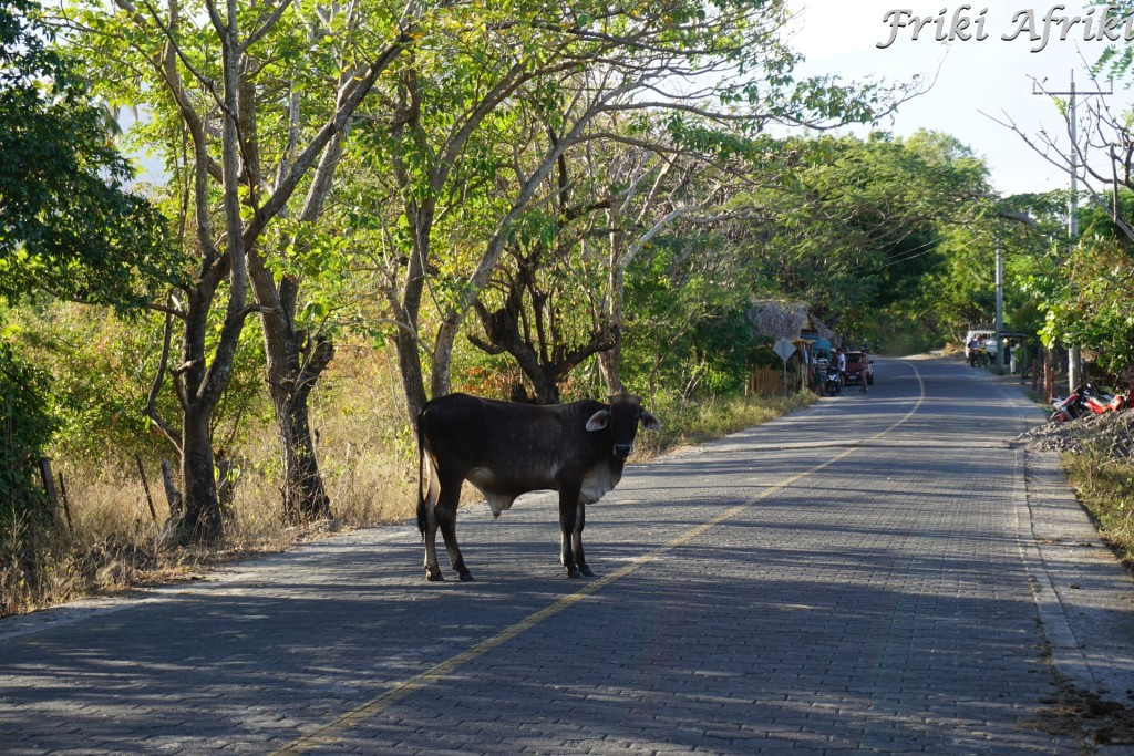 Główna droga wyspy - częściej spotkasz krowę niż samochód