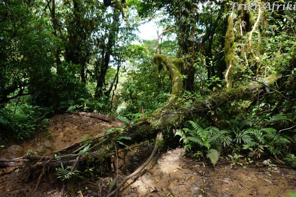 Nicaragua_ometepe_11