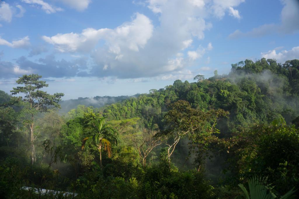 Las deszczowy na Penisula de Osa (Bolita)
