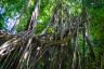 Costa Rica przyroda-29
