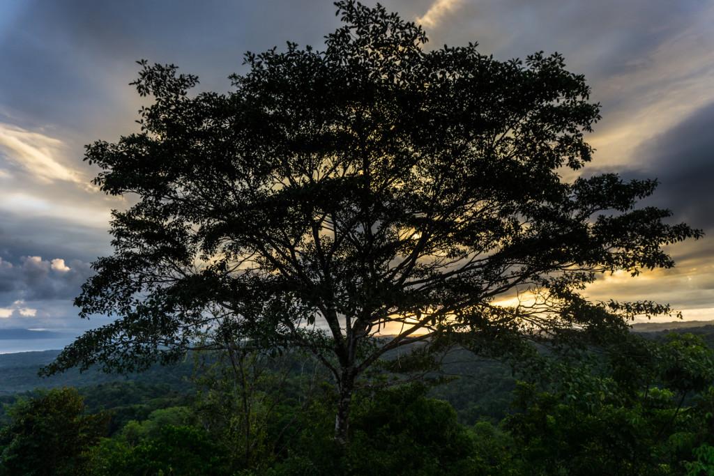 Costa Rica przyroda-31