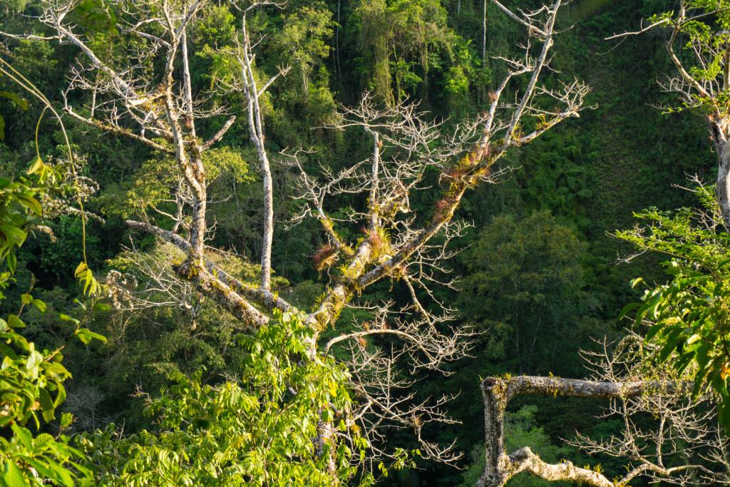 Costa Rica przyroda-43