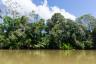 Tropikalna roślinność północnej Kostaryki