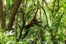 kolejna małpka w Matapalo