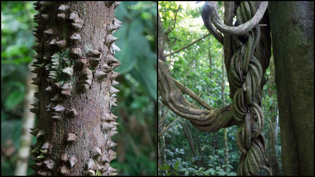 kolaz drzewa