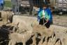 ekwador mercado de animales-10