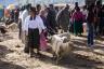 ekwador mercado de animales-15