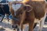 ekwador mercado de animales-2