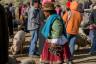 ekwador mercado de animales-20