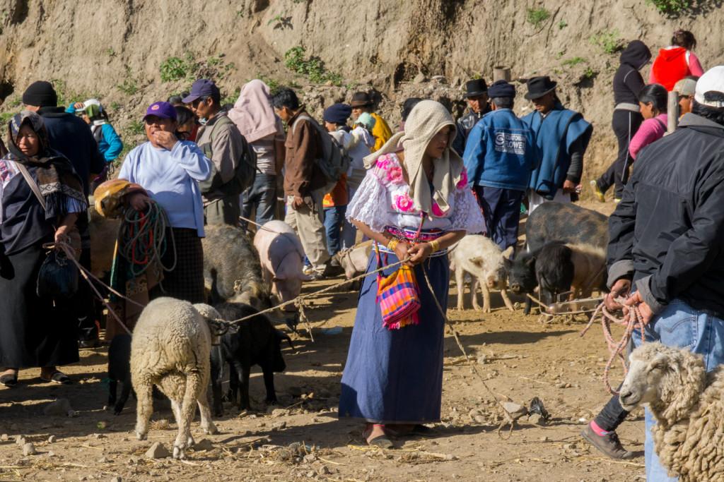 ekwador mercado de animales-22
