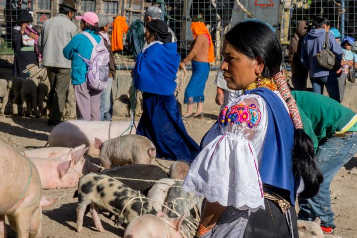 ekwador mercado de animales-24