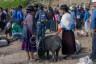 ekwador mercado de animales-28