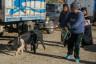 ekwador mercado de animales-3