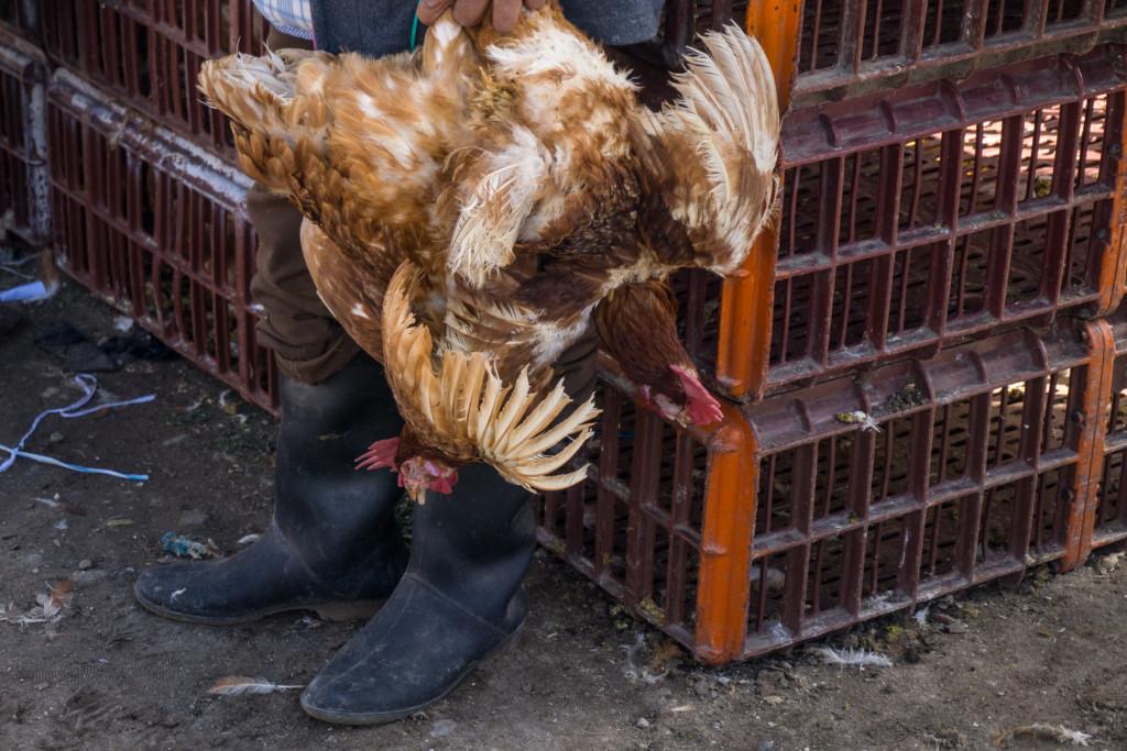ekwador mercado de animales-30