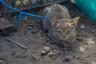 ekwador mercado de animales-35