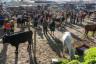 ekwador mercado de animales-5