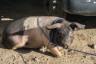 ekwador mercado de animales-9