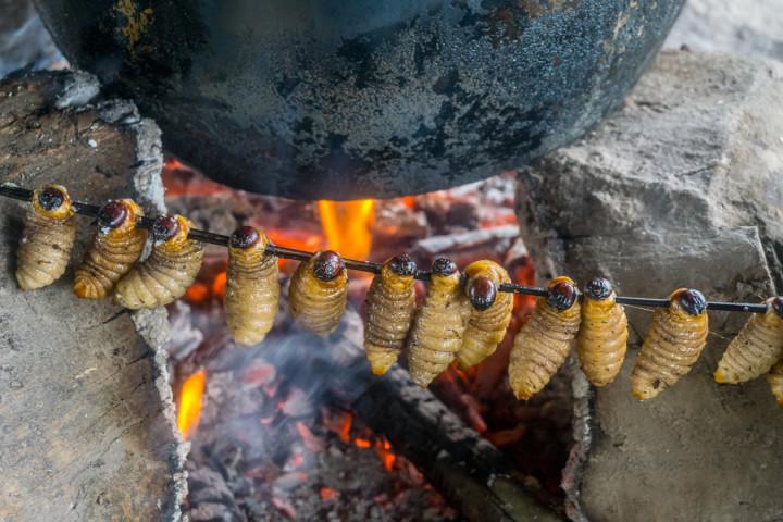 ekwador selwa comida-9