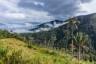 Jeden z typowych widoczków na trasie - zielone góry, trochę palm i mgły