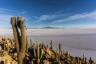 Wulkan, pustynia solna i wyspa kaktusów