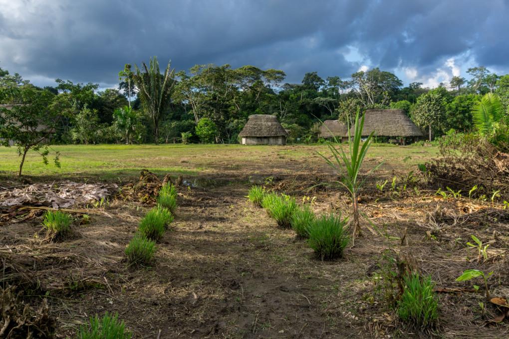 ekwador selwa widoki-15