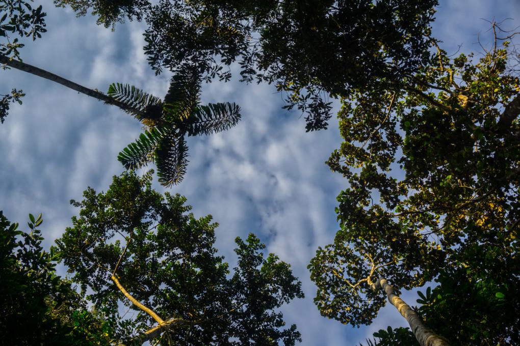 ekwador selwa widoki-24