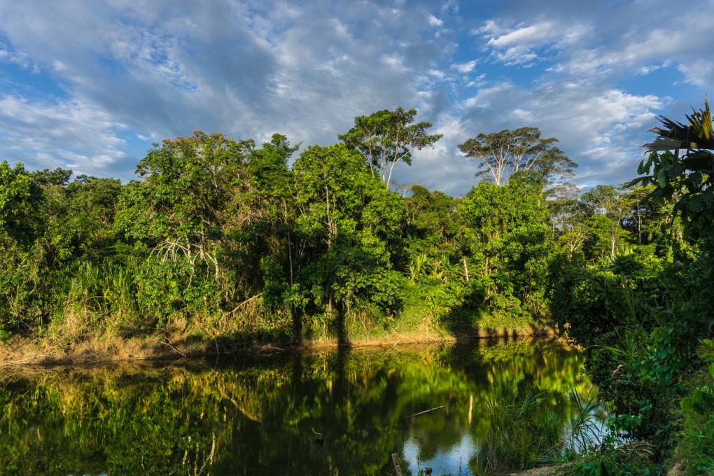 ekwador selwa widoki-33